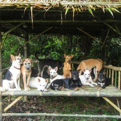 I. Fuchs – Spende Hundedächer