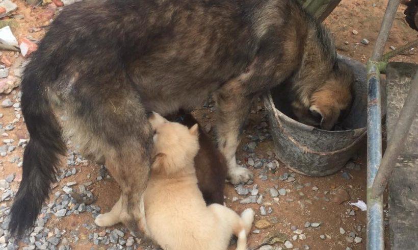 Im Monat März konnten 45 Hunde und Katzen kastriert werden