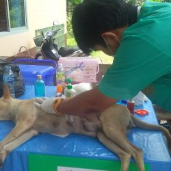 22 Hunde und 20 Katzen wurden bei der heutigen Kastrationaktion kastriert
