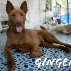 D. Lilja – Geschenk Patenschaft für Ginger für Eliane Koch
