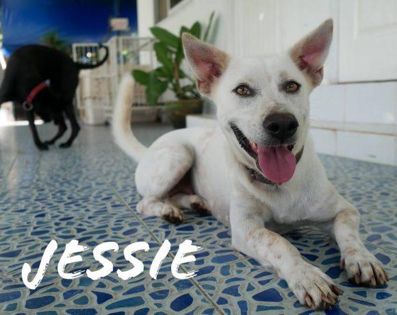 Jessy – Shelter – Reserviert