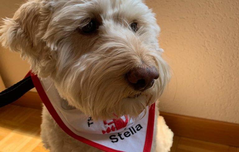 Vom verstossenen Strassenhund zum Schweizerischen Therapiehund!!!! Ehemaliger Schützling Stella