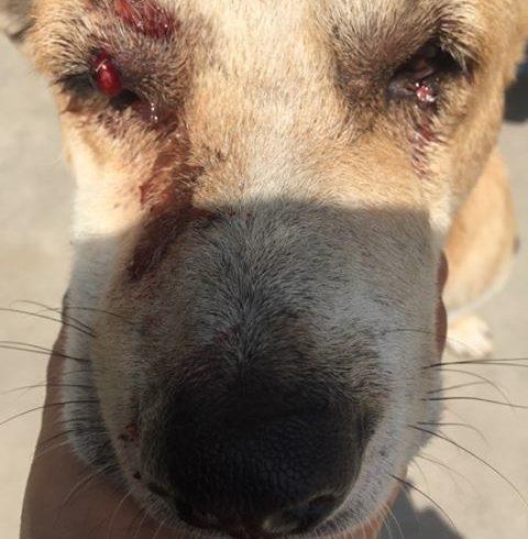 Lucky ein Strassenhund der Hilfe braucht! Ihre  Osterspenden machen es möglich zu helfen