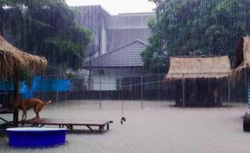 Leider regnet es schon wieder, wir hoffen nicht so stark wie am letzten Sonntag
