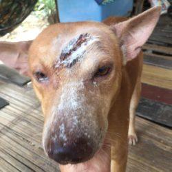 Thong wurde mit einer Machete verletzt!