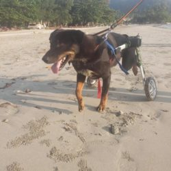 Rosco müde aber glücklich nach einem Morgenspaziergang am Strand