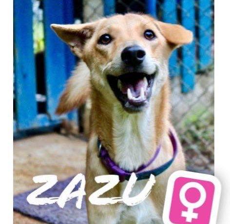 Zazu – Shelter