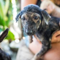 Im März konnten 46 Tiere kastriert werden