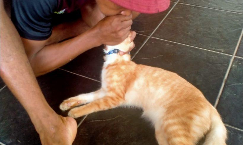 Reanimation einer Katze ist geglückt!
