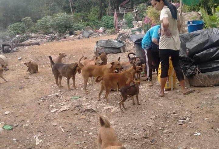 Tägliche Fütterung von Strassenhunden