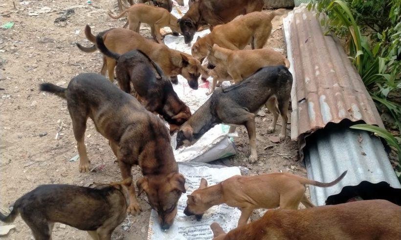 Fütterung der Strassenhunde